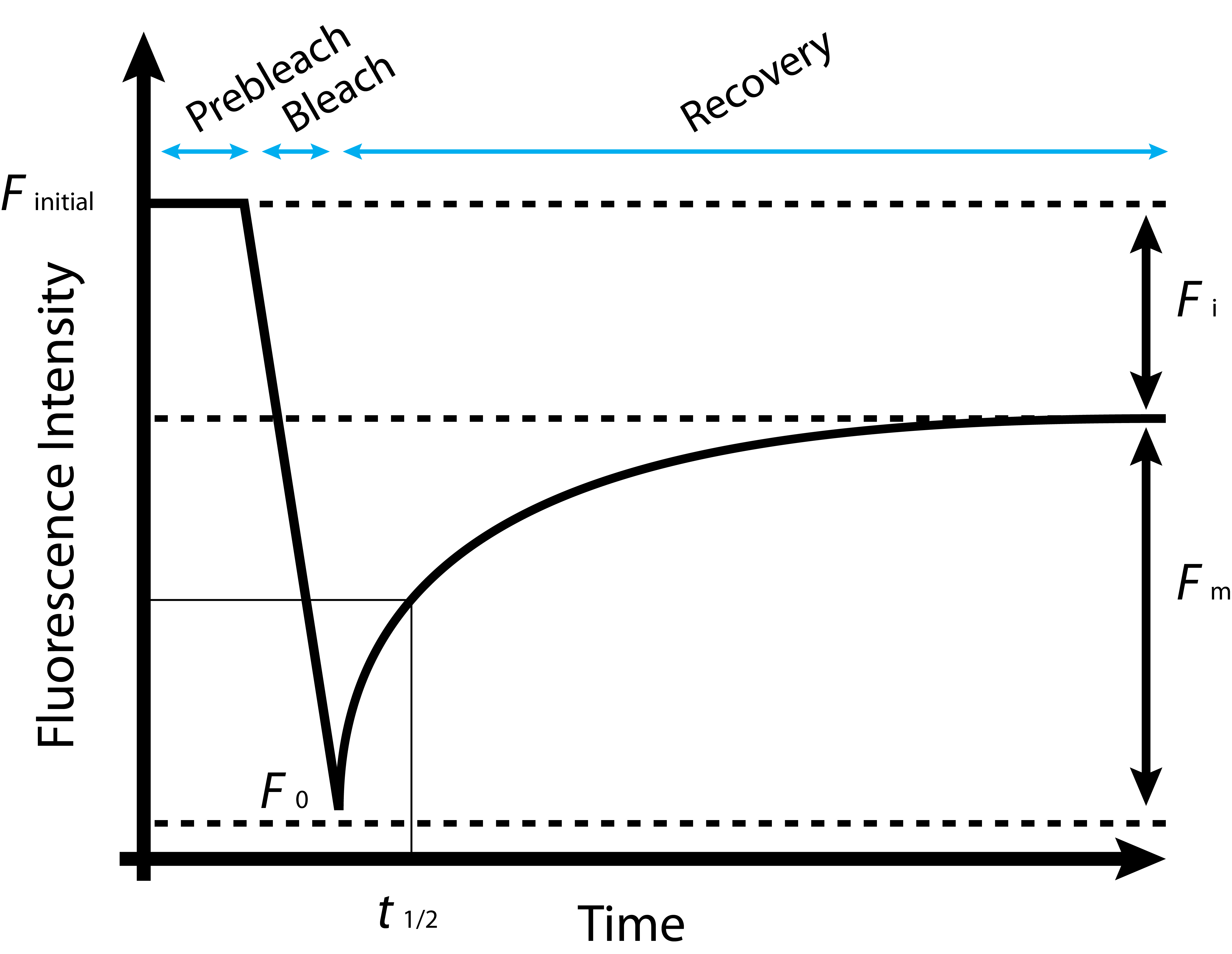 Frap Curves Mybioscience Scientific Illustrations